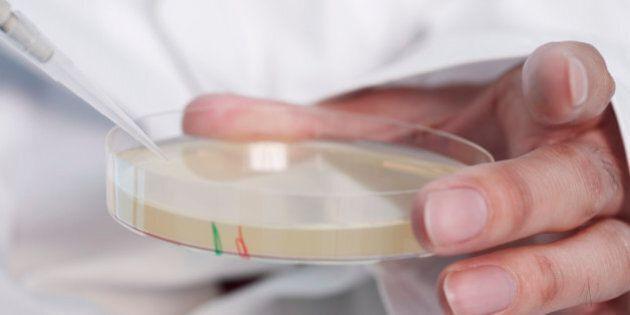 Person holding Petri dish,