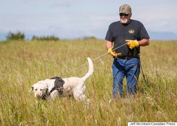 Dogs Can Sniff Out Oil Pipeline Leaks, But Industry Prefers
