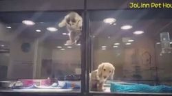 WATCH: Kitten Escapes Glass Box To Play With Puppy