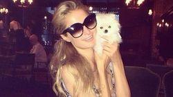 Paris Hilton's Pooch Is A