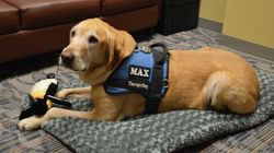 Therapy Dog Helps Girl Testify At Assault