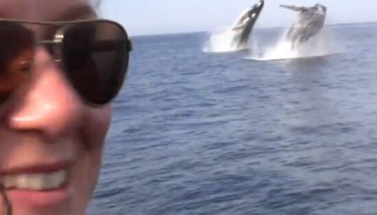 WATCH: Whale Watchers Thrilled By Rare Double