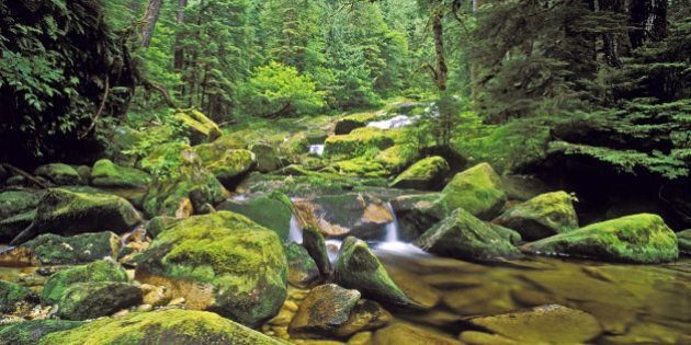 Creek in northern temperate rainforest, Princess Royal Island, British Columbia,