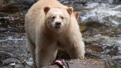 Ending B.C.'s Trophy Hunt Will Cost