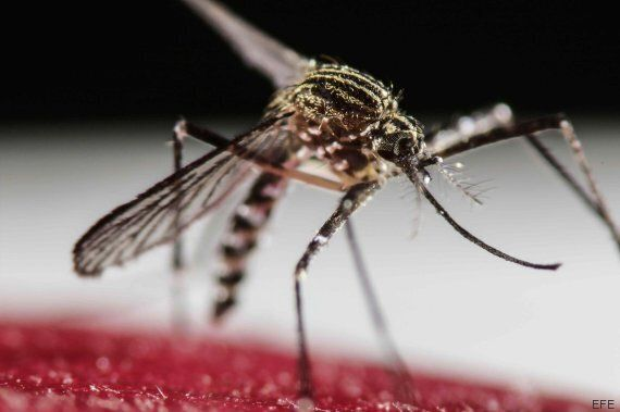 Zika Virus: Canadian Blood Services Puts 21-Day Ban On Some