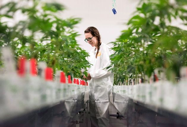 Canopy Growth, Canada's Largest Publicly Traded Weed Grower, Expands To