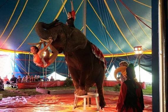 Nosey The Circus Elephant Back In The Lime