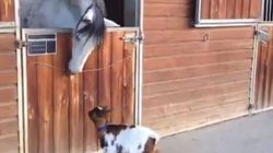 #FriendshipGoals: Nothing Will Keep This Goat And Horse