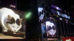 All Month Long, This Cat Video Will Play In Times