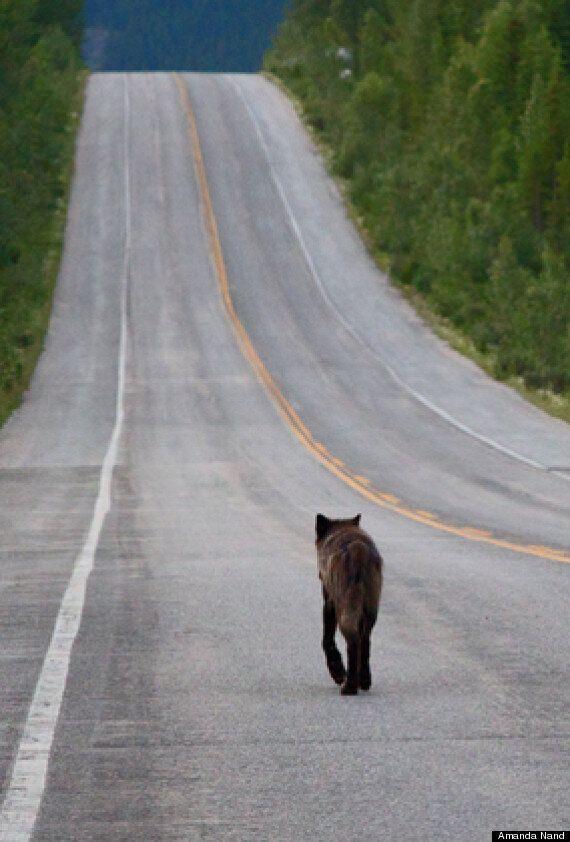 Banff Fire Under Control, Say Officials (PHOTOS,