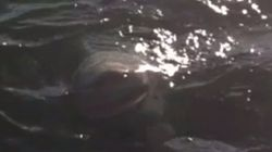 Lake Ontario Shark Video Is Just As Fake As It