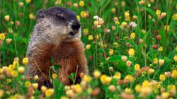 The Statistics Prove It: We've Got The Groundhog Day Rule