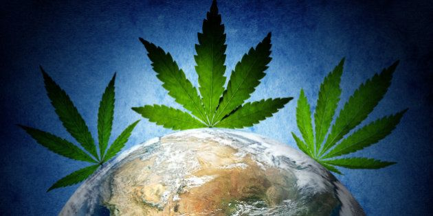 cannabis has captured the world....
