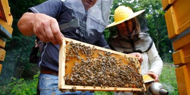 A beekeeping expert shows a beehive honeycomb frame at the Apiarian Research Centre in Godollo, 25 km...