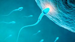 What Women Look For In A Sperm Donor Will Surprise