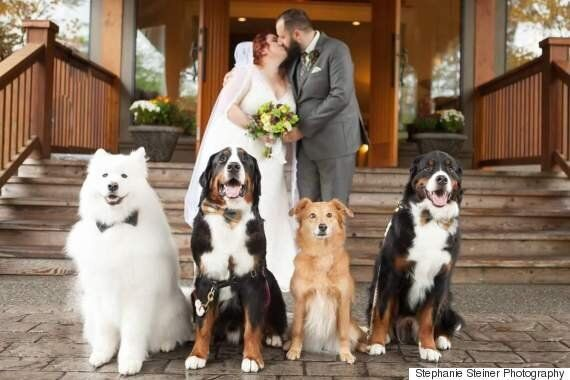 Shandess and Jason Griffin, B.C. Couple, Give Dogs Star Treatment During