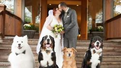 B.C. Couple's Dogs Steal The Show At Their