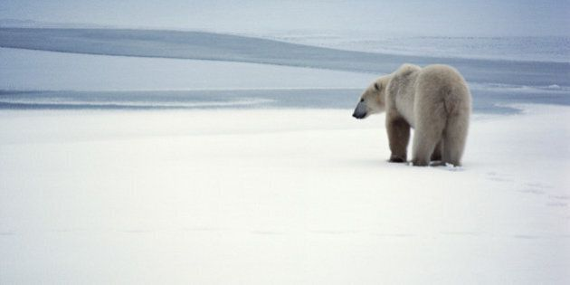 Arctic Council Urged To Ban Heavy Fuel Oil