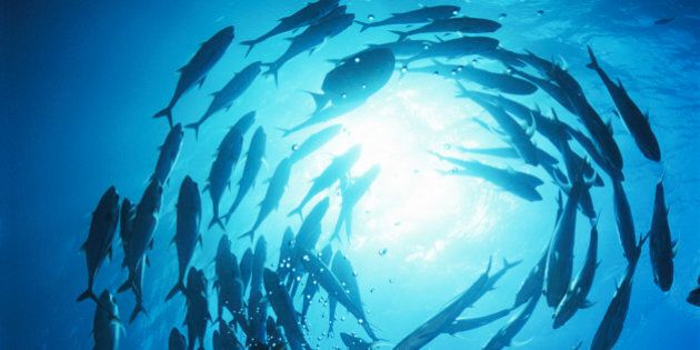World Oceans Day Is Time To Reflect As Pipeline Decision
