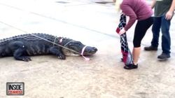 Massive Gator Shows Up At Texas Shopping