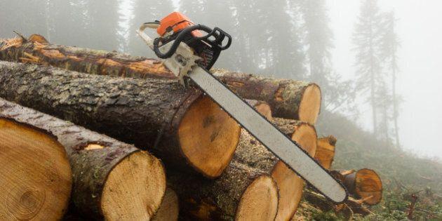 Cut logs at a logging