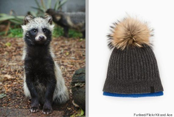 Kit And Ace Fur Labelling Under Fire For 'Asiatic Raccoon