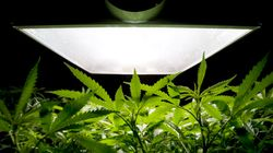 Legal Pot Could Be $5-Billion Windfall For Canada's