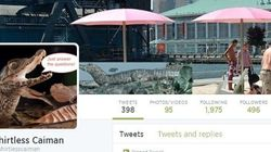 People Behind 'Shirtless Caiman,' 'Save The Penny' Twitter Accounts Speak