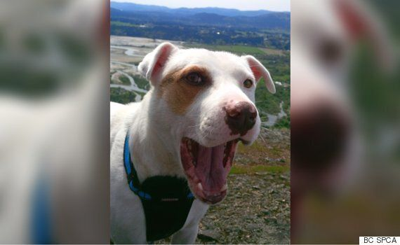 Charges Laid After Dog Found With Chain Embedded In