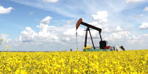 A pumpjack in a canola field. The oil industry is a major economic force in Alberta. This oil rig is...
