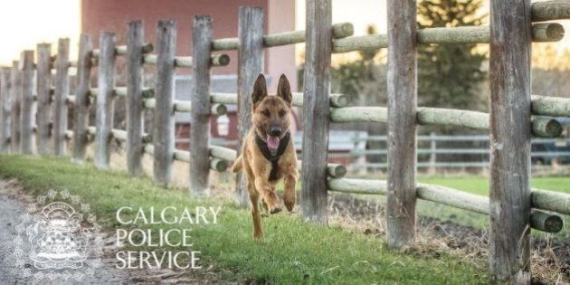 Calgary Police Officer Charged After Dog Escapes And Bites