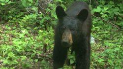 LOOK: Bear