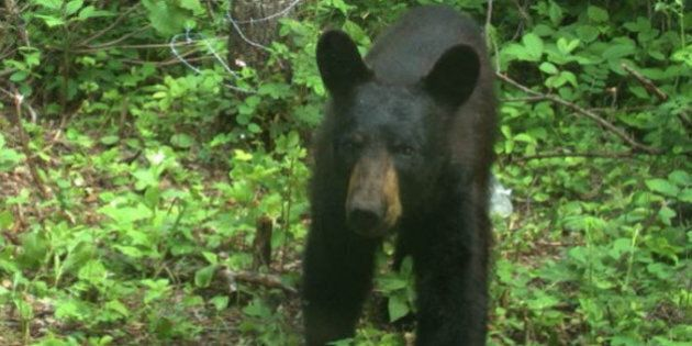 Elk Island National Park Cameras Capture Elusive Black Bears