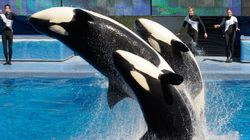 SeaWorld Will End Its Orca Show And Start A Different