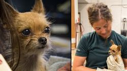 Bitzy The Chihuahua Survives 5 Days Lost In The
