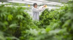Canada Is Now Officially A Marijuana
