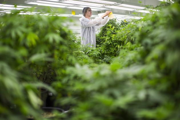 Canada's First Marijuana Export Permit Means Bud Bound For