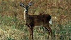 Ohio Homeowner Says Deer Is Holding Her