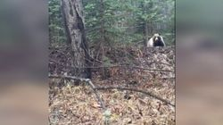 Ontario Tourists Luck Out With Bear After Doing Everything