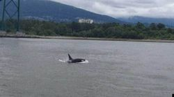 Orcas In The