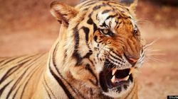 Technology is a Tiger: Powerful, but