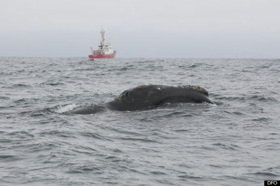 Haida Gwaii Whale Watching Biologists Spot Rare