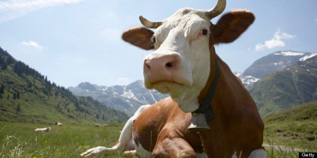 Country Of Origin Labeling: Canadian Beef Farmers Seek Injunction In