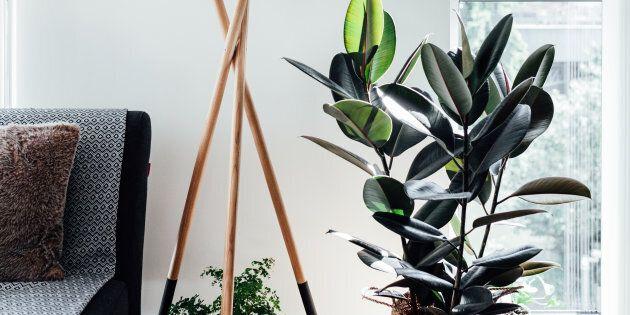 8 plantes d'intérieur qui dépolluent nos
