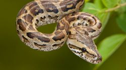 Experts Speculate On Why Snake