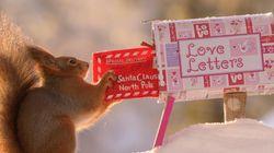 Les écureuils aussi fêtent