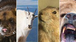 LOOK: Amazing Animals That Call Alberta