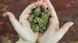 Un 1er festival du cannabis au