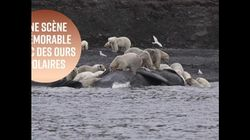 Devinez combien d'ours polaires ont entouré cette