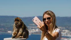 Les selfies, un danger pour les animaux
